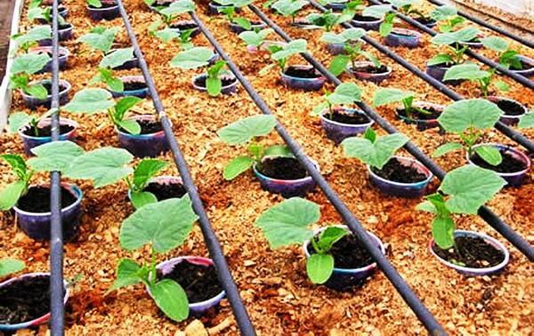 Поливочная система для огорода