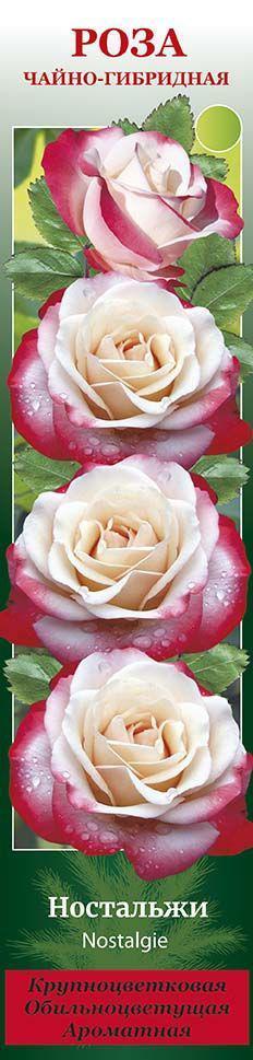 неспешно ностальжи роза чайно гибридная фото описание настоящая эволюция