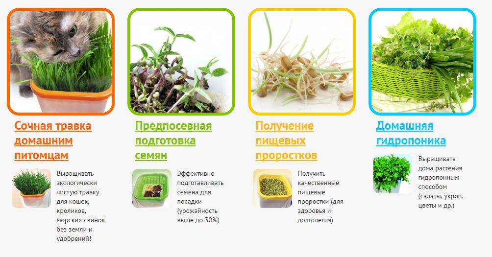 Выращивание микрозелень 65